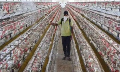 Punjab reported first case of bird flu.